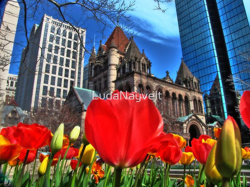 Boston in Bloom by LudaNayvelt