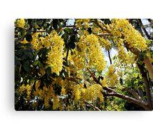 Golden Shower Tree Canvas Print
