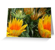 Close Up Of Flowering Gazania In A Garden Greeting Card