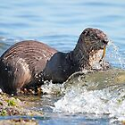 Hungry River Otter by Carl Olsen