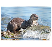 Hungry River Otter Poster