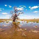Old Man Tree by David Haworth