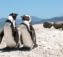Penguin Shack Cape Town by Neil  Bradfield