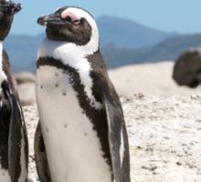 Penguin Shack Cape Town Sticker