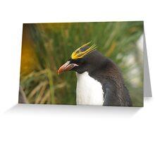 Macaroni Penguin - Cooper Bay, South Georgia Greeting Card
