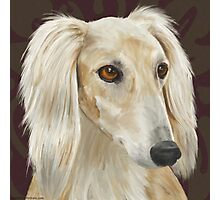 Gorgeous Light Fur Saluki Dog on Brown Background Photographic Print