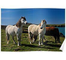 Horses, Pembrokeshire Poster