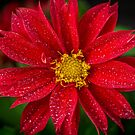 Bright Red by Keith G. Hawley
