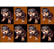 Rottweiler Pop Art Photographic Print