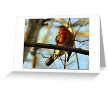 Springtime Greeting Card
