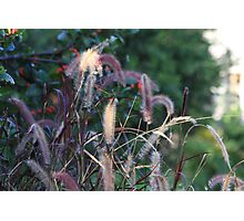 Fuzzy Tails Photographic Print