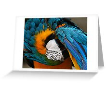 His Point Of View Greeting Card
