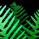 stained ferns by Jan Stead JEMproductions