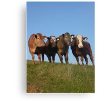 And the Cows in the Meadow go 'Moo!' Canvas Print