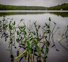Stormy Day at Sisters Lake by mlphoto
