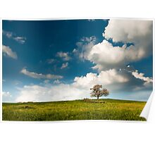 single tree in spring Poster