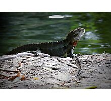 Reptile Rock Photographic Print