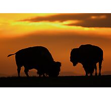 Bison Sunset Photographic Print