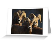 A Group of Rams Greeting Card