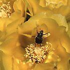 Beetle Dance by William C. Gladish