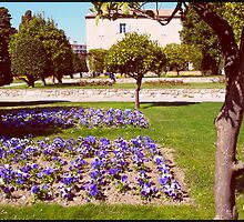 Flowered Park by daffodil