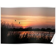 Sun Setting on a Louisiana Rice Field Poster