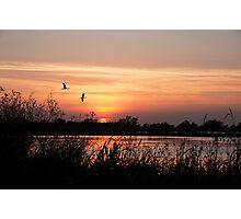 Sun Setting on a Louisiana Rice Field Photographic Print