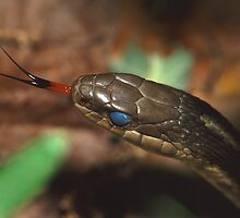 Garter Snake Portrait by William C. Gladish