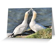 Gannets on Bempton Cliffs. Greeting Card