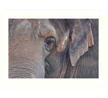 in an elephant's eye Art Print