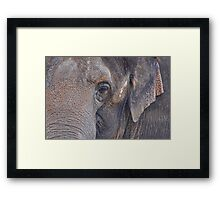 in an elephant's eye Framed Print