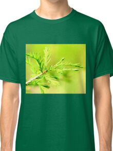 Cypress in Spring Classic T-Shirt