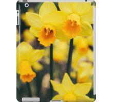 Yellow Daffodil Flowers iPad Case/Skin