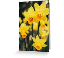Yellow Daffodil Flowers Greeting Card