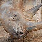 rhino horn  by jaffa
