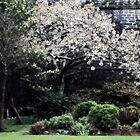 Spring: Royal Citadel, Plymouth UK by Jeremiah