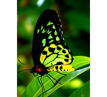 birdwing Photographic Print
