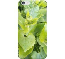 Plant#7 iPhone Case/Skin