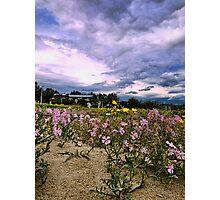 Fiori e nuvole Photographic Print