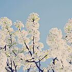 White Blossoms by AndreaMcClain