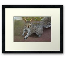 Oh, Is This Seat Taken? Framed Print
