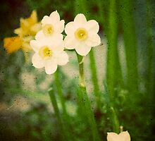 Daffodils by AndreaMcClain