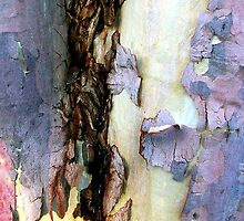 Bark abstract by Roz McQuillan