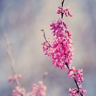 Blossoms At The Zoo by AndreaMcClain