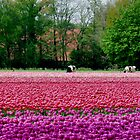 COWS AND TULIPS by Johan  Nijenhuis