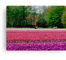 COWS AND TULIPS Canvas Print