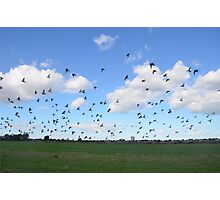Flock Of Pigeons Photographic Print