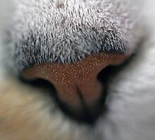 Cats Nose Macro Photography by PassingEcho