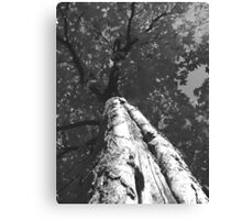Looking up. Canvas Print