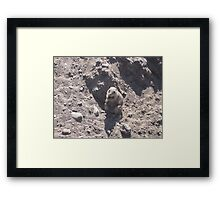 Fat Groundhog Framed Print